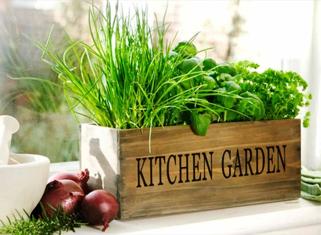 Как можно вырастить зелень в домашних условиях