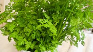 Выращивание зелени на подоконнике круглый год – выбор трав и особенности ухода