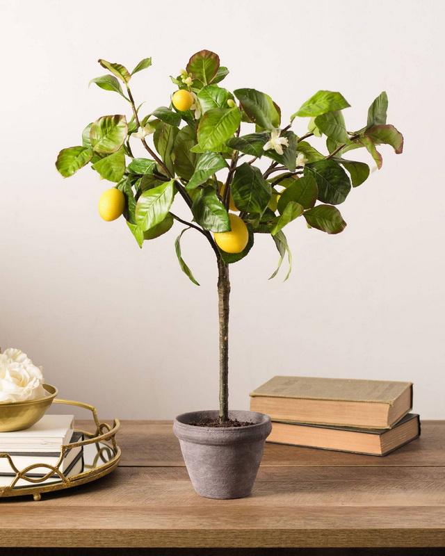 Выращиваем лимонное дерево в домашних условиях